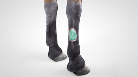 vet-horse-gel-dressing-2